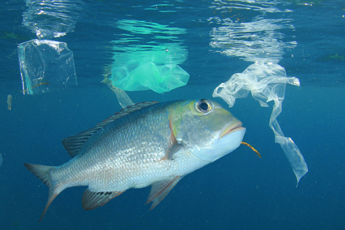 How do the Basel and Stockholm conventions relate to marine litter and plastic pollution?