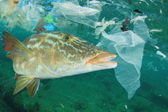 Improved governance called for to prevent 12,000 million tonnes of plastic waste by 2050